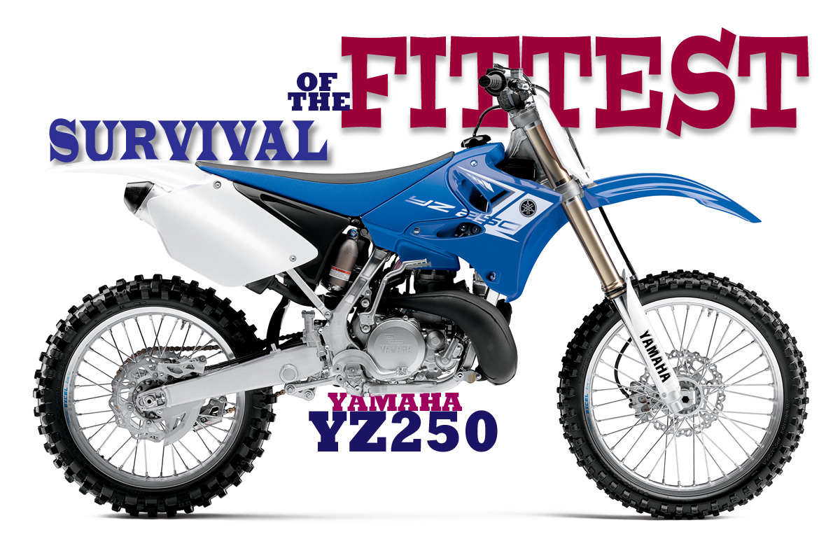 Survival Of The Fittest Yamaha Yz250 2stroke Story Dirt Bike. Survival Of The Fittest Yamaha Yz250 2stroke Story. Wiring. 2008 Yz250f Engine Diagram At Scoala.co